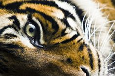 Every time I feel emotionally weak and flimsy, I take a breath and remember that I have a beautiful tiger in me.
