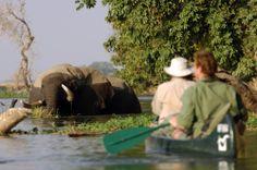 Canoeing with Elephants Mana Pools