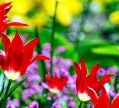 garden #flowers