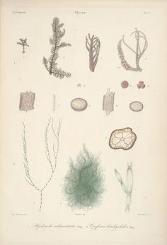 https://flic.kr/p/JzZhAy | n5_w1150 | Historia fisica, politica y natural de la isla de Cuba.. Paris : A. Bertrand, 1838-1861.. biodiversitylibrary.org/page/9182720