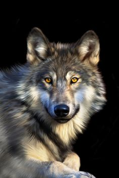 Wolf by Julie Hoddinotti - this would make a beautiful huge mural surrounded by antique beams!