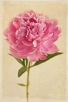 Image result for peony with letters for stem tattoo