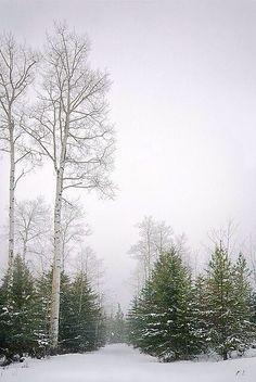 Winter snow: so peaceful. Winter Szenen, Winter Love, Winter Magic, Winter Trees, Winter Colors, Winter White, Winter's Tale, Snowy Day, Snow Scenes