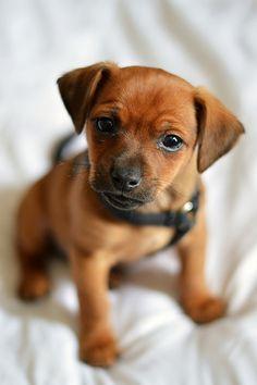 Cute puppy and dog - http://www.1pic4u.com/blog/2014/12/11/suesse-hundebabys-202/