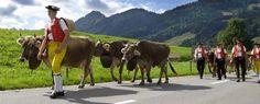 Alpfahrt und Alpabfahrt - Appenzellerland - Urlaub in der Schweiz