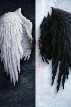 Image for Angel wings iPhone 6 wallpaper HD - Wings Wallpaper, Angel Wallpaper, Iphone 6 Wallpaper, Dark Wallpaper, Feather Wallpaper, Photo Backgrounds, Background Images, Editing Background, Ange Demon