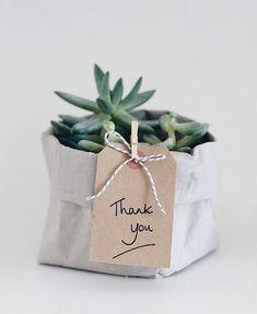 como-presentear-com-suculentas-plantas-terrarios-ideias-dicas (Foto: Reprodução/Pinterest)