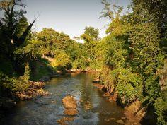 Sembra un fiume in mezzo all'Amazzonia, invece non è che un fiumiciattolo di campagna...  #photo , #jungle , #foresta , #nikon