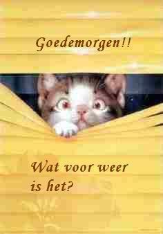 WEER EN VERKEER - demi-dieren.jouwpagina.nl