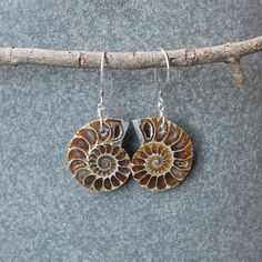 Fossil earrings  Ammonite jewelry  natural by NaturesArtMelbourne,