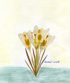 Waldorf ~ 5th grade ~ Botany ~ Crocus ~ Flower Press Project ~ main lesson book