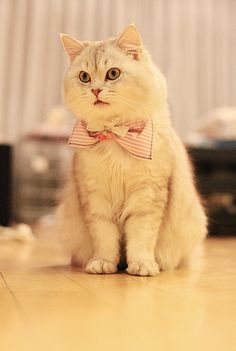 new bow tie for him