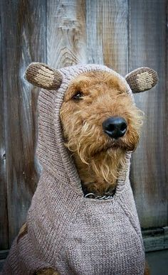 Airedale Terrier... More
