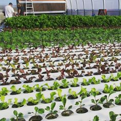 5 Reasons Hydroponic Growing is More Profitable Than Soil Growing Hydroponic Growing, Greenhouse Growing, Hydroponic Gardening, Gardening Tips, Aquaponics Greenhouse, Hydroponics System, Aquaponics System, Garden Water Fountains, Water Garden