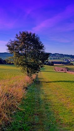 Einsamer Baum in der Landschaft | Landschaftsfotografie. Zwettl an der Rodl, Österreich / Austria