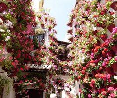 Cidade espanhola tem suas janelas floridas   Jardim das Ideias STIHL - Dicas de jardinagem e paisagismo