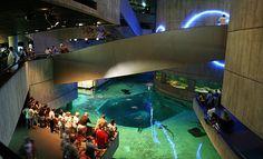baltimore | national aquarium