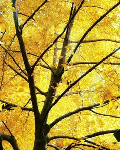 Yellow Tree Photo Mustard Yellow by Maddenphotography