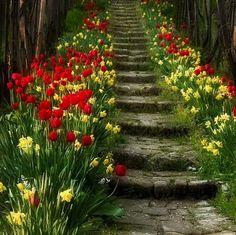garden - gardening - garden steps - flowers - tulips - garden design and architecture Garden Steps, Garden Paths, Beautiful Gardens, Beautiful Flowers, The Secret Garden, Plantation, Dream Garden, Daffodils, Tulips Garden