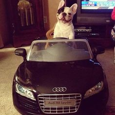 Rich Dogs Of Instagram: The Proof That Pups Live Better Than Humans   Bored Panda