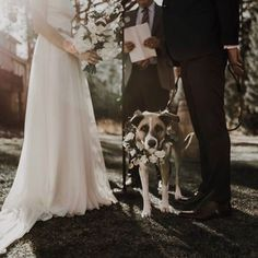 Well our week has gone to the dogs! Just kidding, we just wanted an excuse to show off Sis's 🐶, I mean Heather and Erik's wedding👰🏻🤵🏻. Arizona Wedding, Wedding Planner, Wedding Dresses, Dogs, Fashion, Wedding Planer, Bride Dresses, Moda, Bridal Gowns