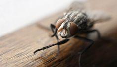 Rimedi naturali per tenere lontane mosche e mosconi! | Case da incubo