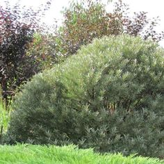 Plant Health, Republic Of Ireland, Weeding, Hedges, Permaculture, Forests, Compost, Evergreen, Shrubs
