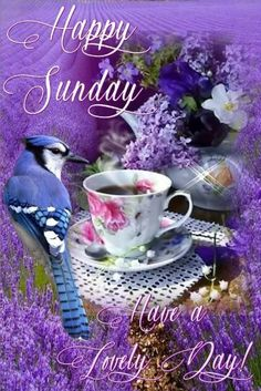 Good Morning Happy Sunday Images, Quotes, GIF, Blessings Weekend – Have a Blessed Sunday to all! Happy Sunday Pictures, Blessed Sunday Morning, Blessed Sunday Quotes, Good Morning Sunday Images, Sunday Morning Quotes, Good Morning Happy Saturday, Good Morning Sister, Sunday Wishes, Sunday Greetings