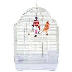 A great value cage for your smaller pet bird. Small Bird Cage, Small Birds, Pet Birds, Parrot Cages, Canary Cage, Budgies, Hanging Chair, Parakeets
