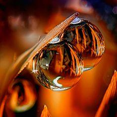 Reflective dewdrops.
