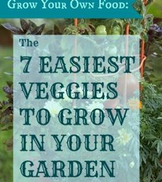 Grow Your Own Food: The 7 Easiest Veggies to Grow