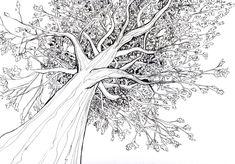 Google Afbeeldingen resultaat voor http://ioar.net/wp-content/uploads/2012/11/old-tree-drawing.jpg