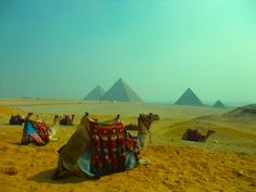 Camels' view.