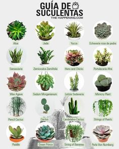 Details about ECHEVERIA variety mix rare exotic hens chicken succulent flowering… – Best Garden Plants And Planting Cactus Types, Types Of Succulents, Cacti And Succulents, Planting Succulents, Planting Flowers, Succulent Names, Air Plants, Garden Plants, Indoor Plants