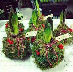Hyacintløg