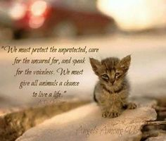 We must protect the unprotected . // cat quotes to live by Crazy Cat Lady, Crazy Cats, I Love Cats, Cute Cats, Animals And Pets, Baby Animals, Funny Animals, Cute Animals, Cat Quotes