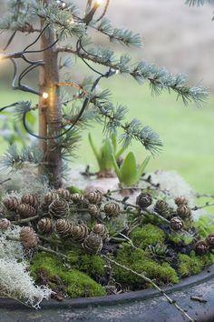 Udendørs - julepyntet fad Christmas Garden Decorations, Christmas Greenery, Christmas Porch, Christmas Angels, Rustic Christmas, Christmas Wreaths, Xmas, Christmas Inspiration, Garden Inspiration