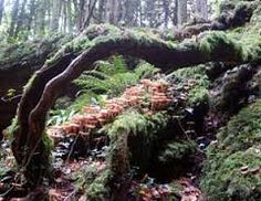Image result for puzzlewood