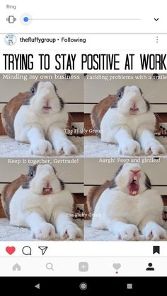 Definitely me ! Animal Humour, Funny Animal Jokes, Animal Puns, Cute Funny Animals, Funny Cute, Rabbit Jokes, Funny Rabbit, Pet Rabbit, Cute Bunny Pictures
