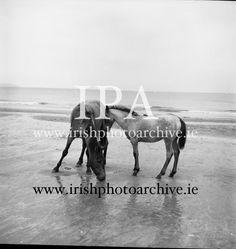 Connemara Pony 'Ocean Breeze' with her 4 month old foal at Portmarnock Strand and Connemara Pony, 4 Month Olds, Photo Archive, Breeze, Ireland, Irish, Moose Art, Ocean, Horses