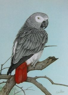 I am friends with an African Gray named Jackson who is an amazing ventriloquest (sp?) of sounds Parrot Drawing, Parrot Painting, Parrot Pet, Parrot Toys, Pretty Birds, Beautiful Birds, Senegal Parrot, Parrot Tattoo, African Grey Parrot