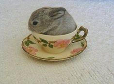 Bunny rabbit in a tea cup