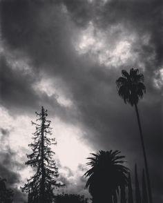 Stormy Day Los Angeles  The rain clouds backdrop the neighborhood trees during a short break in the rain.  #LA #losangeles #california #ig_losangeles #wheream_I_LA #insta_losangeles #cali_grammers #lagrammers #losangelesgrammers #discoverla #conquer_la #unlimitedlosangeles #californiacaptures #uglagrammers #blackandwhite #blackandwhitephotography #bnw_drama #bnw_legit #bnw_captures #gf_bnw #bnwmaster #ig_naturelovers #ig_naturepictures #ig_naturesbest @24earth