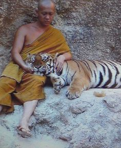 monk with tiger #buddha