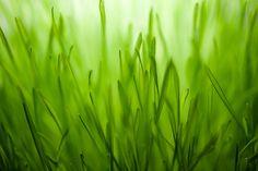 Gorgeous green