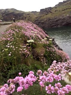 Cornwall is full of beautiful wild flowers this may. Easy Healthy Dinners, Easy Dinner Recipes, Cornish Pasties, Places In England, Sunday Roast Chicken Dinner, Dump Dinners, Spring Photography, Holiday Places, Cornwall England