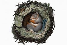 Eläimillä on keinonsa selvitä Pohjolan talvioloista. Biology For Kids, Environmental Studies, Animal Totems, Christmas Mood, Nature Crafts, Forest Animals, Science And Nature, Finland, Squirrel