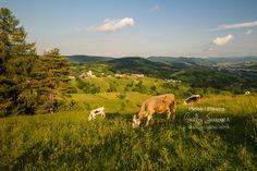 Romania, Explore, Mountains, Nature, Summer, Travel, Animals, Voyage, Animales