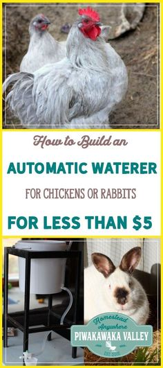 Automatic watering systems take the worry out of watering the animals. An auto waterer can last for several days and it keeps rabbits and chickens from making the water dirty or tipping it out. To make this automatic waterer I used a few things that I had laying around, but you could easily replace these with things you have or can make.