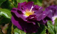 Le blog anticrise de ma famille nombreuse: Comment utiliser les Elixirs Floraux ou les Fleurs...